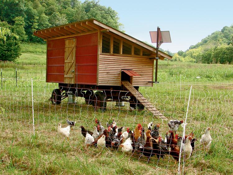 домашнюю птицефабрику